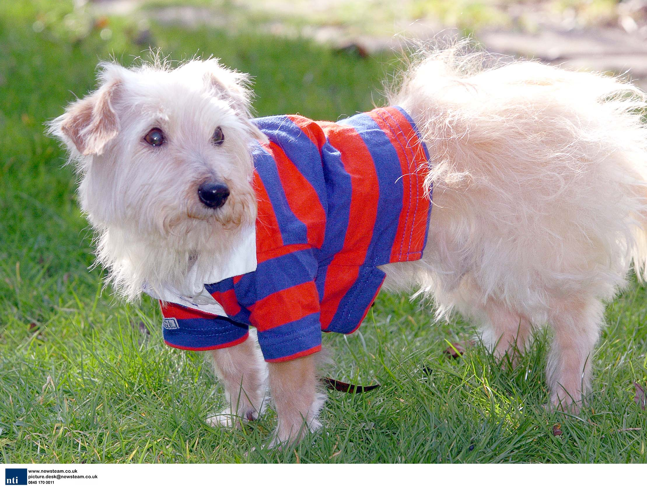 Bertie the Dog, in his rugby shirt.