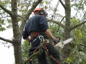A tree surgeon is fighting for his life after nearly shopping his head off with a chainsaw