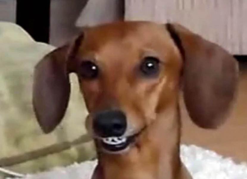 Kalea the smiling dog