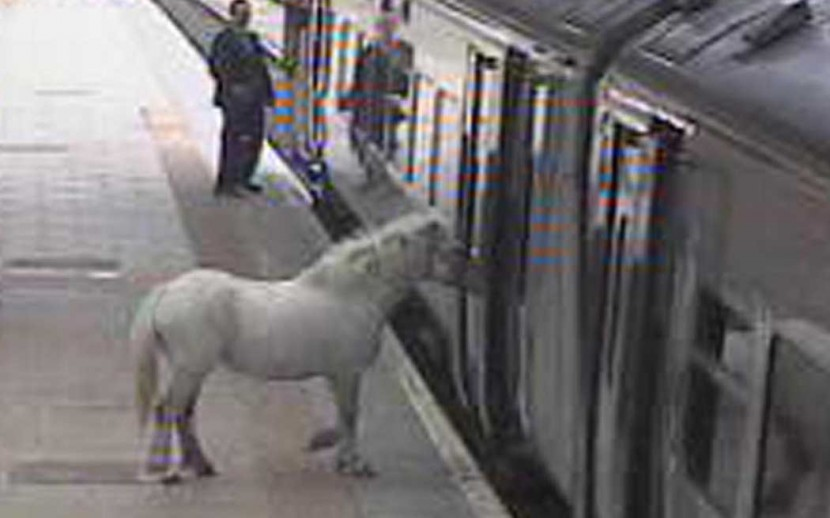 Man tries to board train with a pony