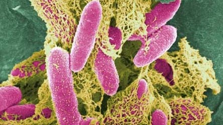'Likely source' of E. coli outbreak – German farm
