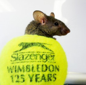BRITAIN - Wimbledon Mice