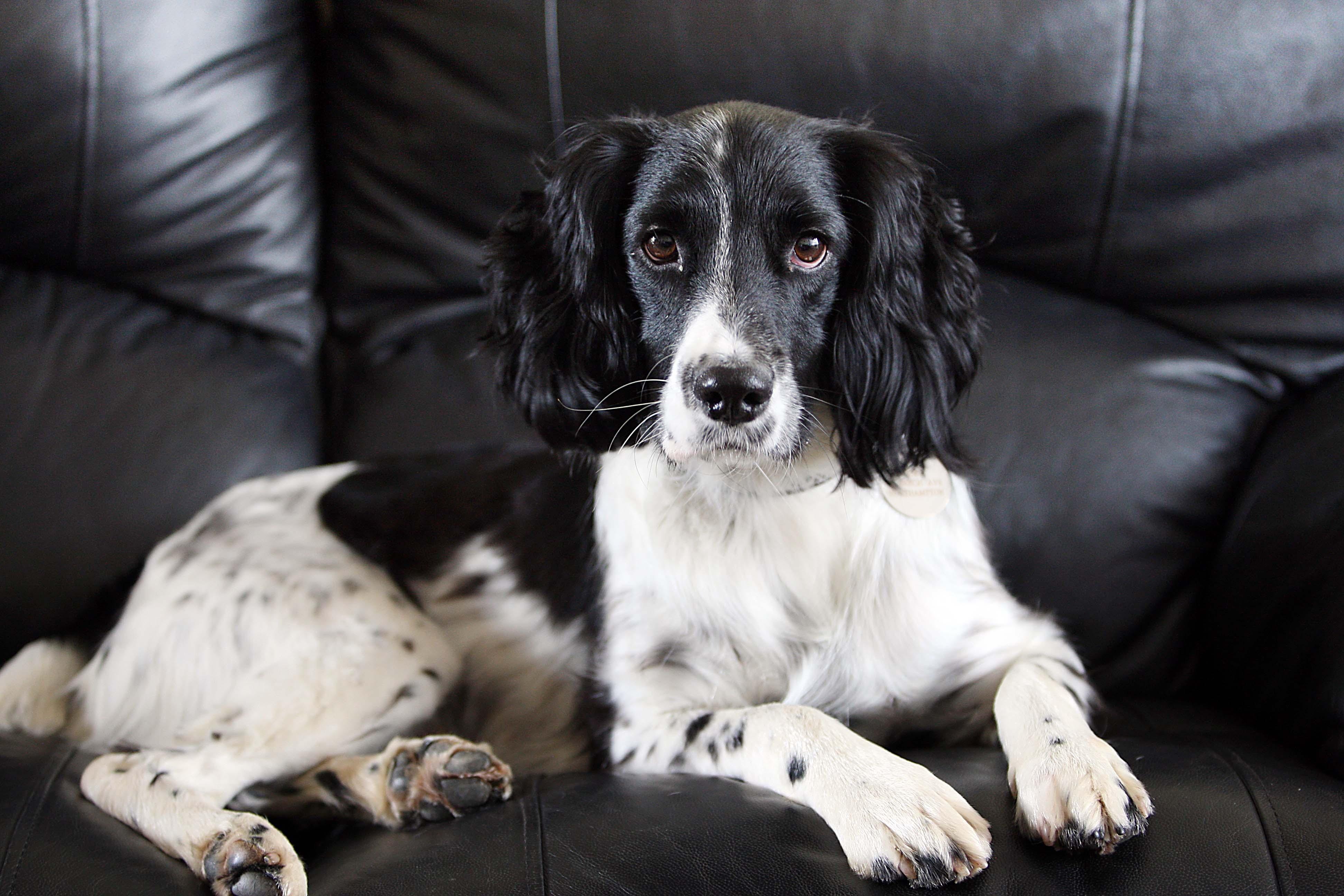 Dog Rescued by Schoolboy