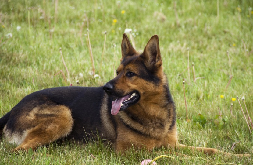 Dog called Guinness catches drink driver