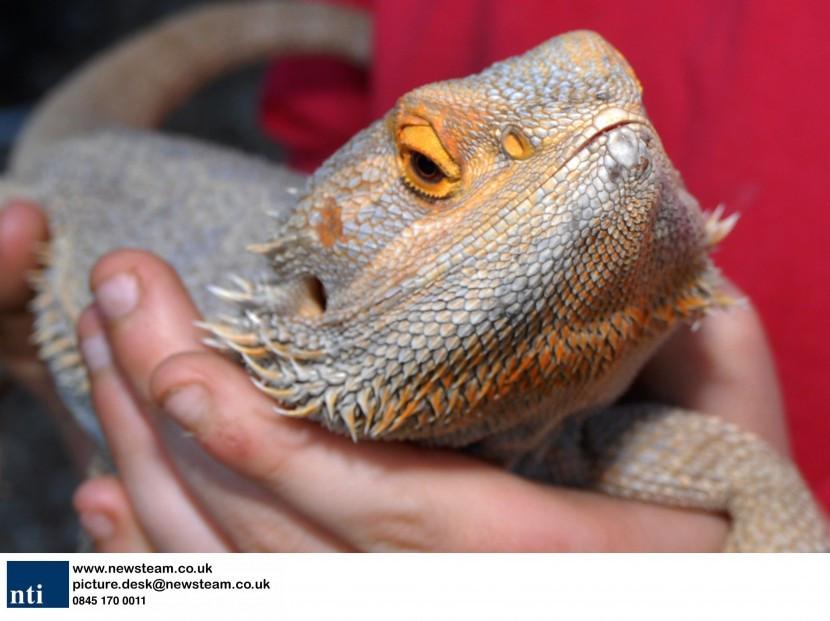 Missing dragon turns up at George and Dragon pub