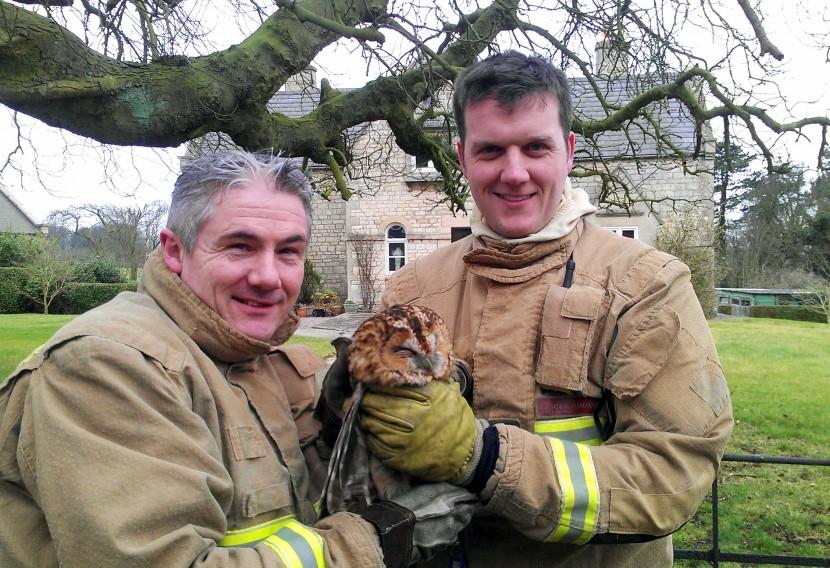 Bird-brained barn owl was rescued twice by firefighters