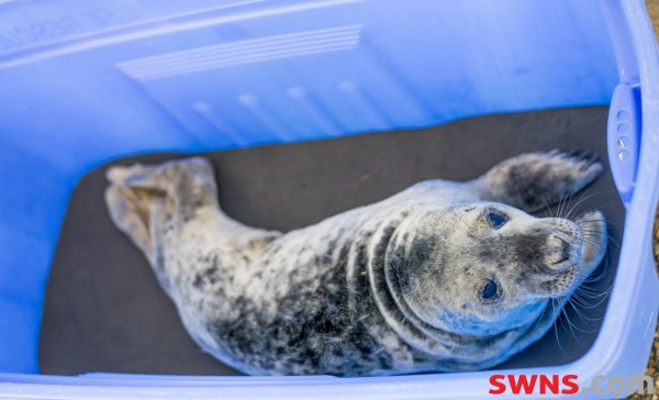 SEALS BEING FITTED WITH 'SMARTPHONES' TO TRACK THEIR DECLINE