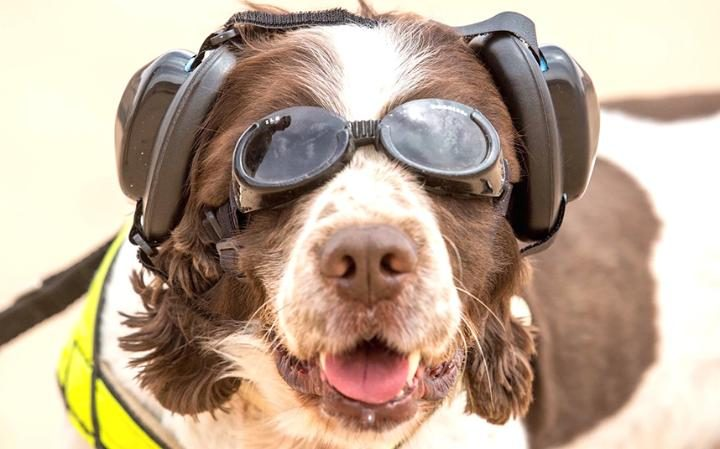 NIGHT VISION GOGGLES USED TO COMBAT DOG FOULING HAVEN'T CAUGHT ANYONE