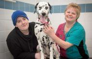 GREEDY DALMATIAN HAD TO UNDERGO EMERGENCY OP AFTER WOLFING DOWN 36 DOG CHEWS