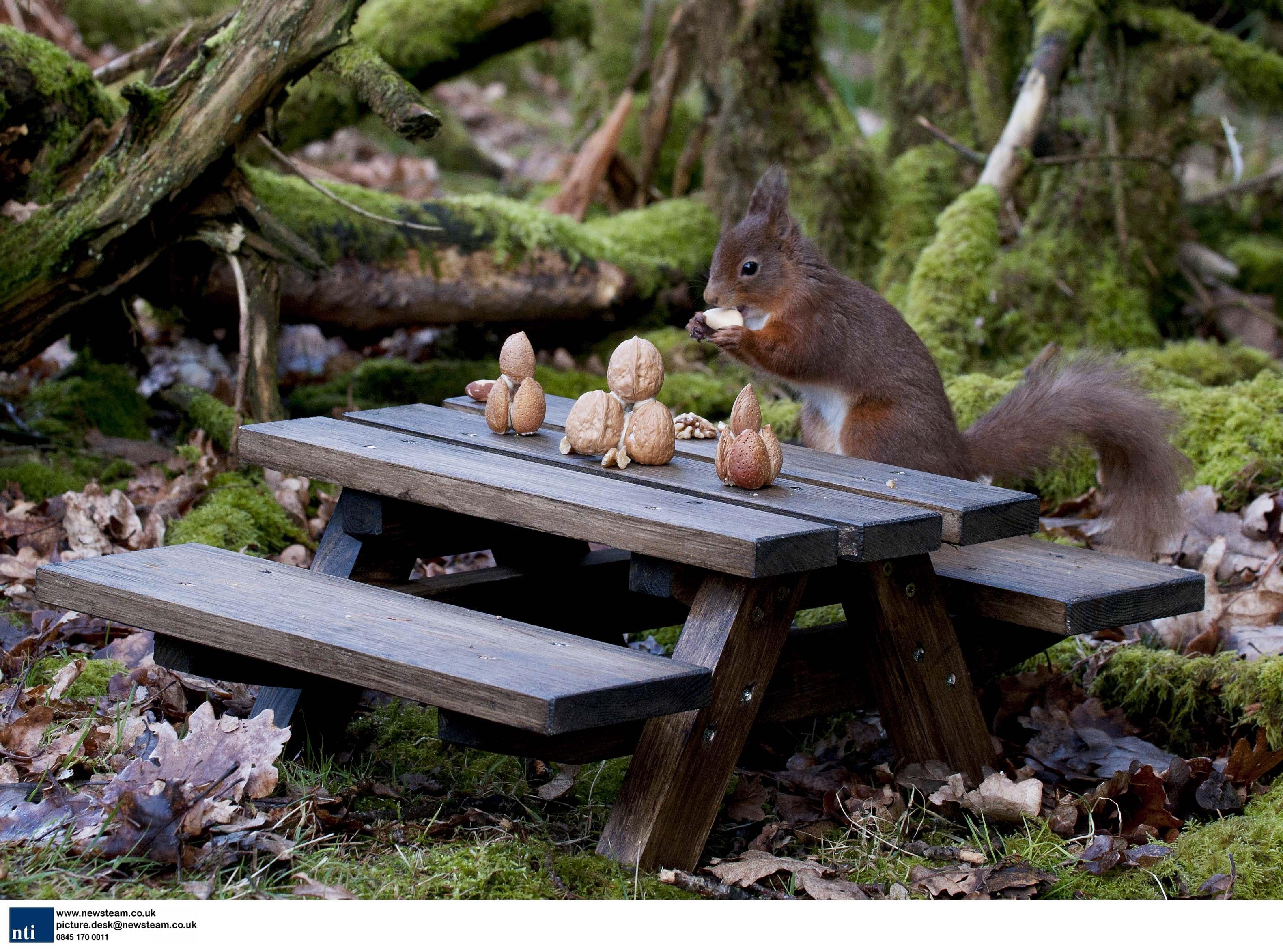 A squirrels picnic