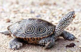 Man nearly loses arm after catching flesh eating bug from terrapin