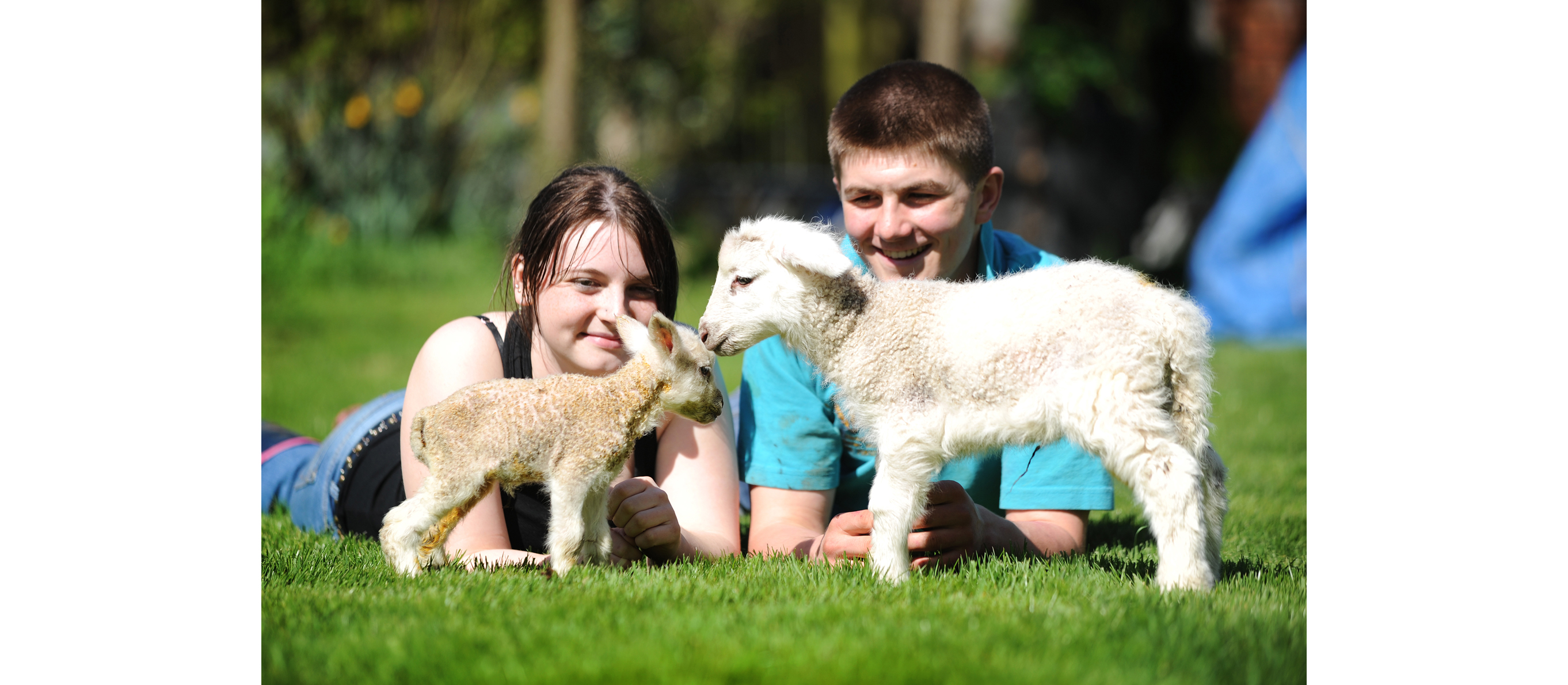 Tiny lamb thats half the size of her siblings survives