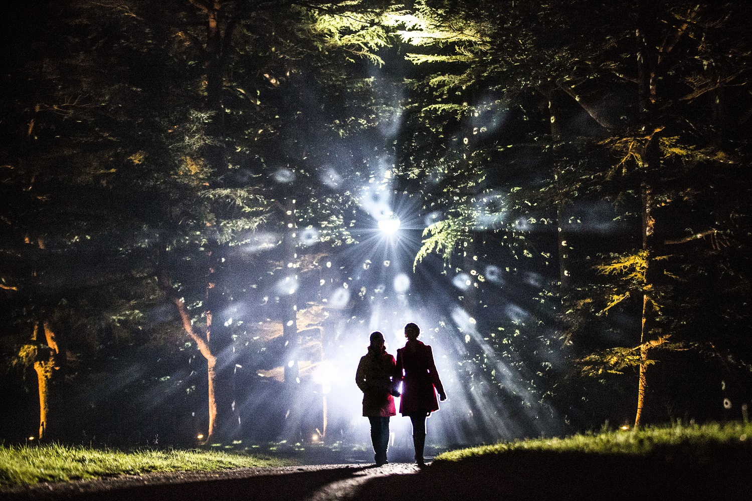Dazzling light display illuminates Westonbirt's magical winter walk this Christmas