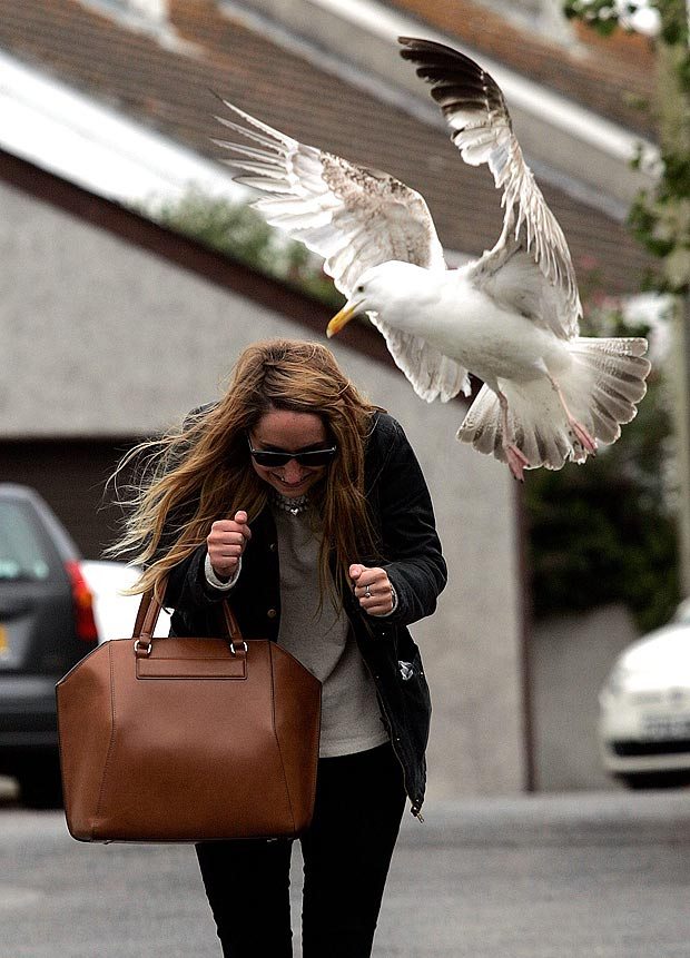 WOMAN ATTACKED BY DIVE-BOMBING SEAGULL IN LAND-LOCKED WORCESTER