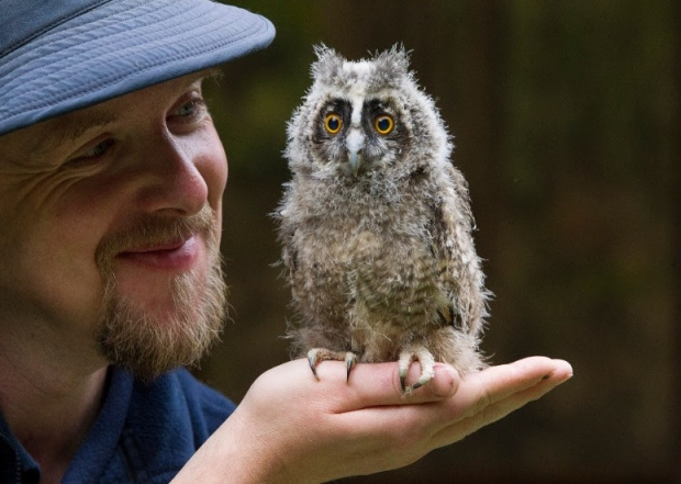 FLUFFY BABY OWLS ARRIVE AT CENTRE