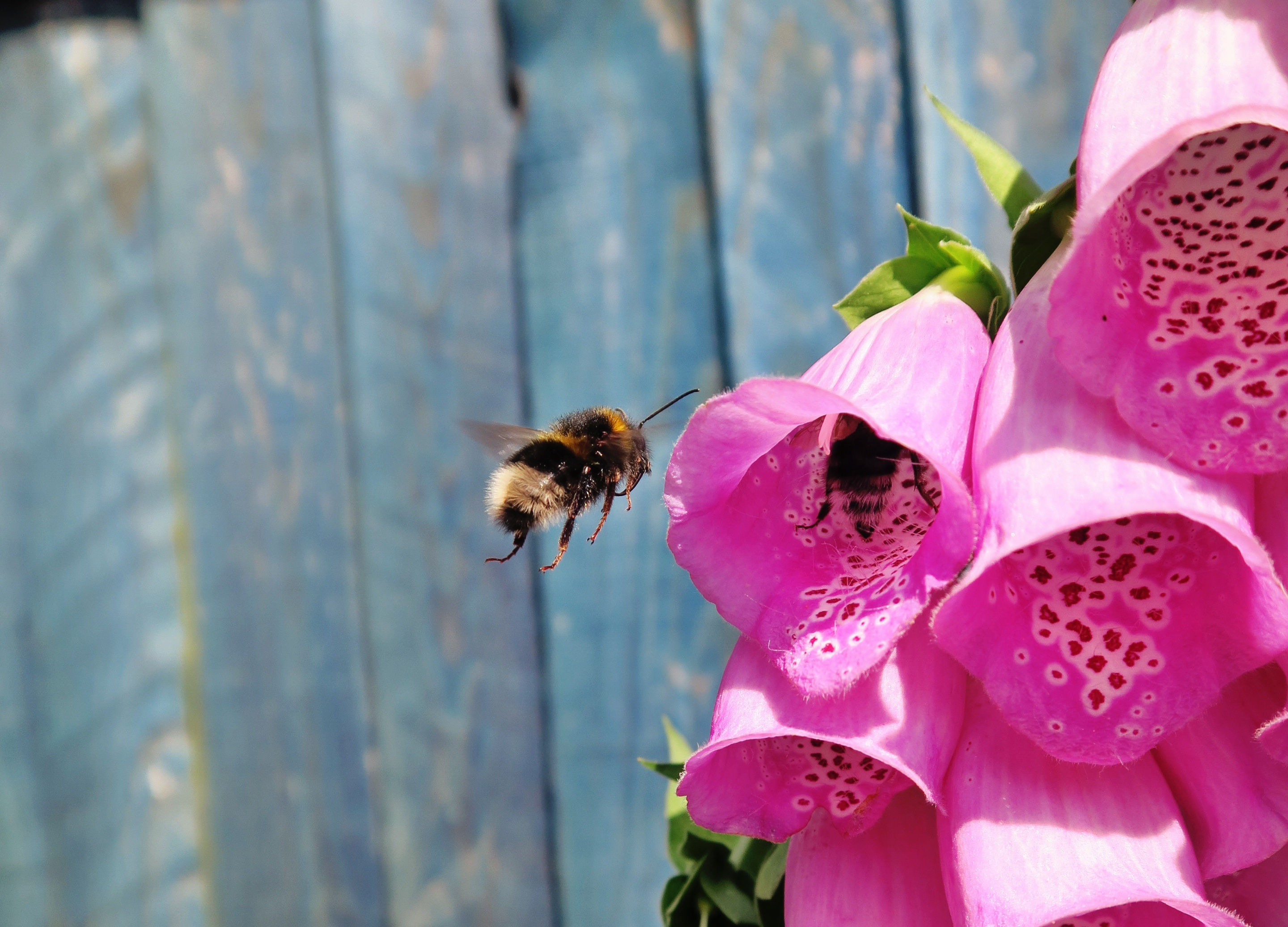 AIR POLLUTION DAMAGES BEES