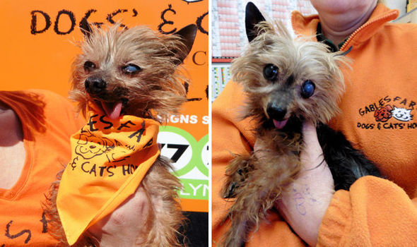 DOG FOUND ON BEACH SO POORLY NAMED SHIPWRECK BY RESCUERS