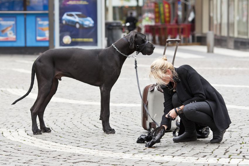 Young blond woman cleaning dog mess