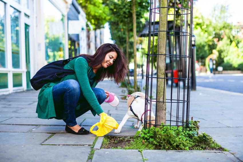 Woman picking up dog poo