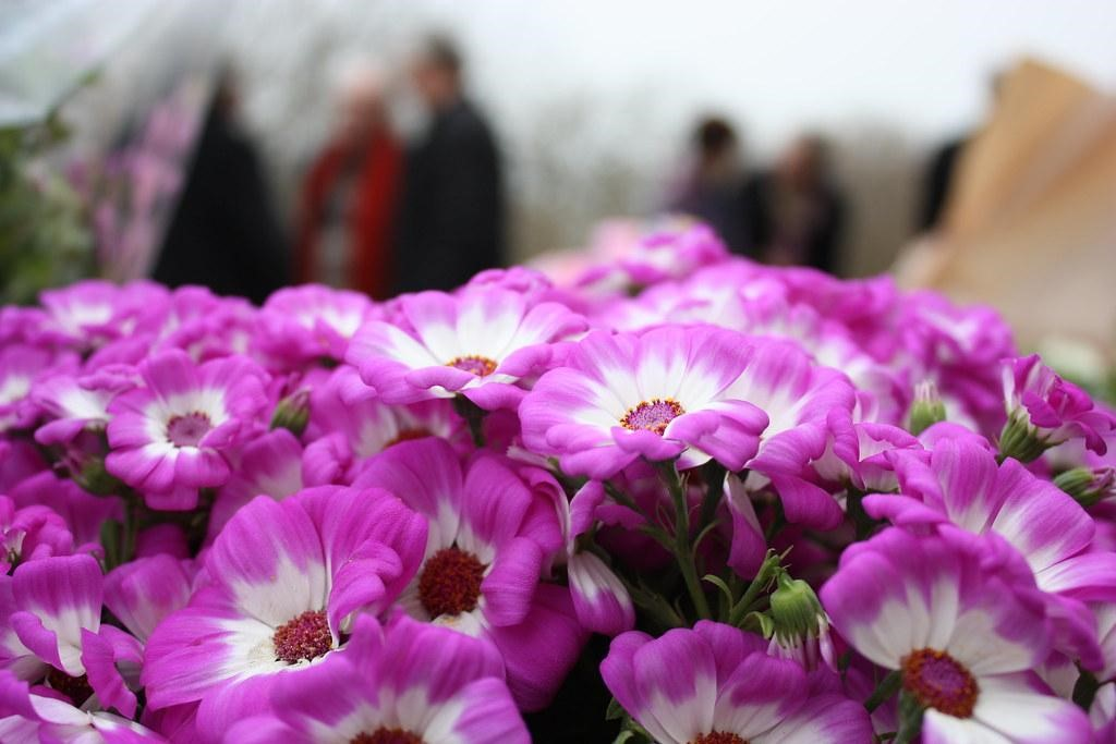 How to Avoid Rising Funeral Costs
